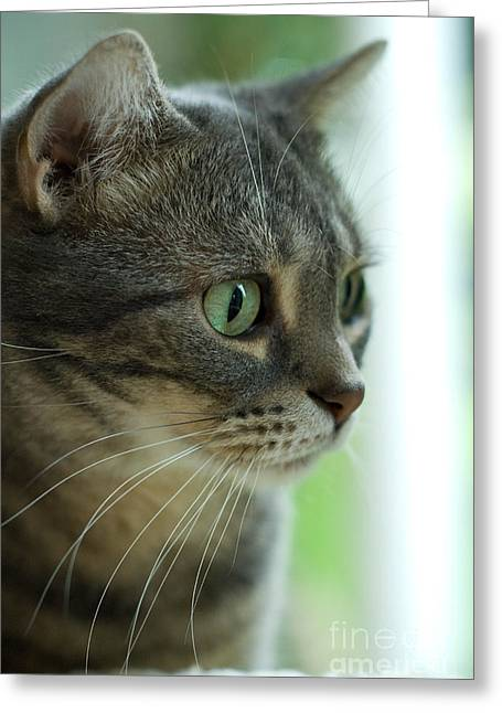 American Shorthair Greeting Cards - American Shorthair Cat Profile Greeting Card by Amy Cicconi