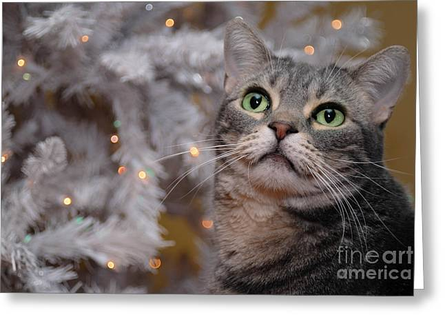 Whisker Greeting Cards - American Shorthair Cat with Holiday Tree Greeting Card by Amy Cicconi