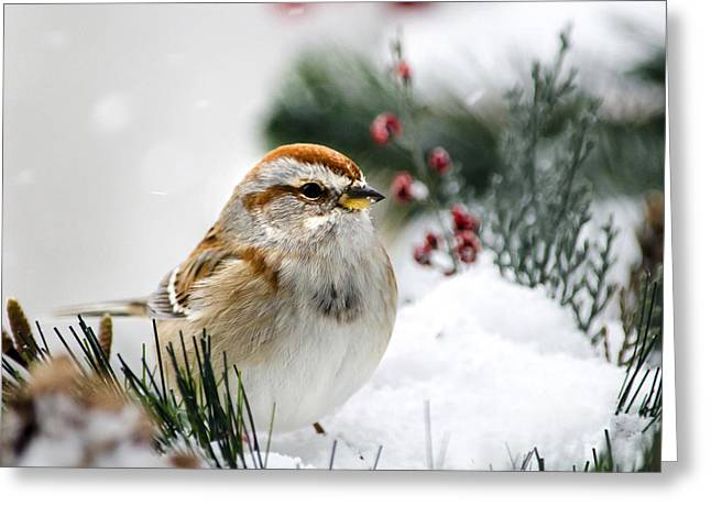 Sparrow Greeting Cards - American Tree Sparrow In Snow Greeting Card by Christina Rollo