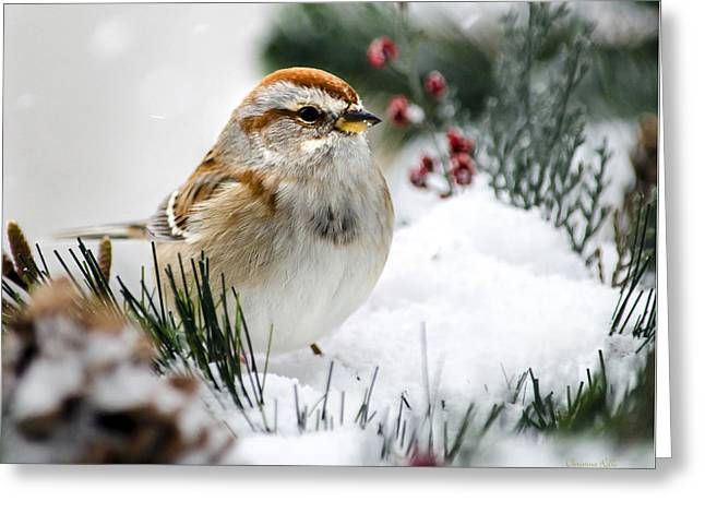 Bird On Tree Greeting Cards - American Tree Sparrow In Snow Greeting Card by Christina Rollo
