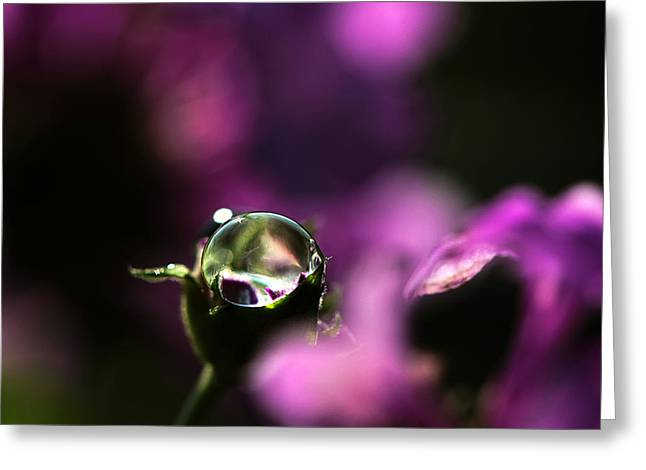 Owner Greeting Cards - Amethyst Greeting Card by Janet Pancho Gupta