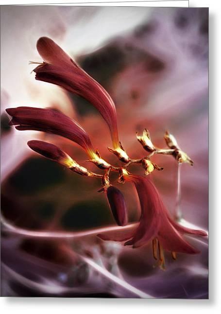 Crocosmia Greeting Cards - Amethyst Nebula Greeting Card by Darlene Kwiatkowski
