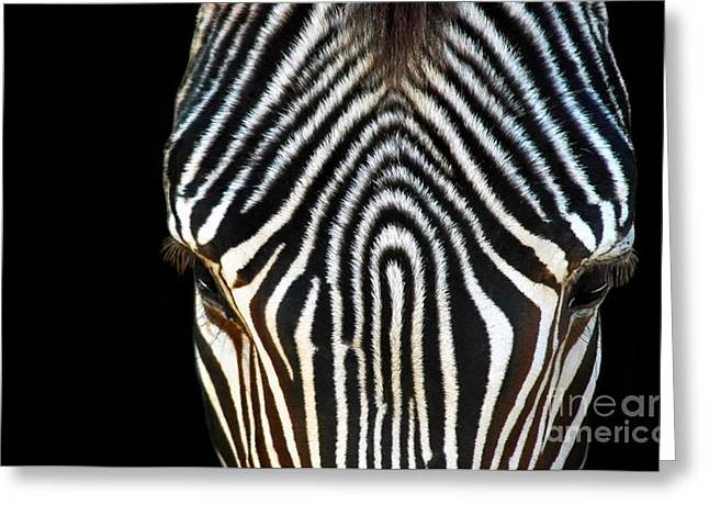Zebra Patterns Greeting Cards - Aminal Print Greeting Card by Dan Holm