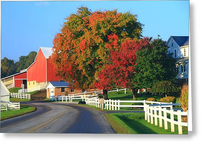 Amish Greeting Cards - Amish Barn In Autumn Greeting Card by Dan Sproul