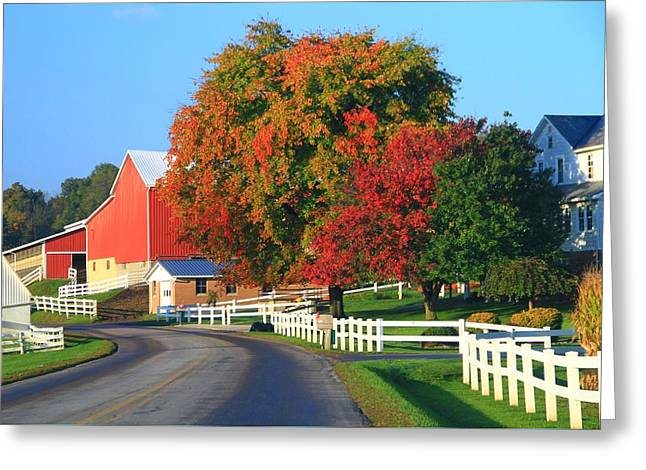 Amish Barn In Autumn Greeting Card by Dan Sproul