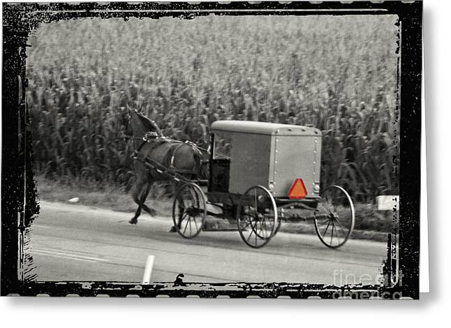 Horse And Cart Greeting Cards - Amish Buggy Monochrome Greeting Card by Terry Weaver