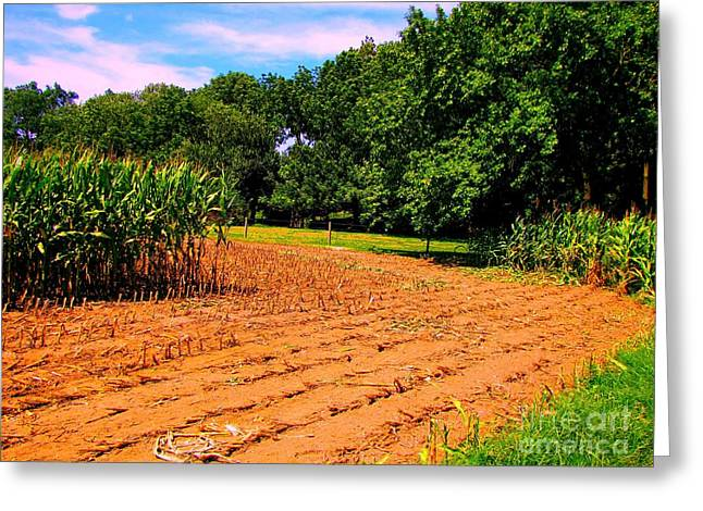 Amish Corn Field Greeting Card by Annie Zeno
