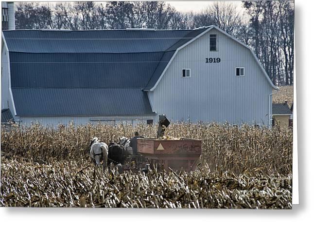 Corn Picker Greeting Cards - Amish Corn Picking and 1919 Barn Greeting Card by David Arment