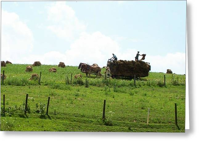 Mennonite Community Greeting Cards - Amish Fall Harvest Greeting Card by R A W M