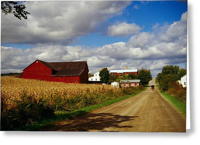 Amish Scenes Greeting Cards - Amish Farm Buildings And Corn Field Greeting Card by Panoramic Images