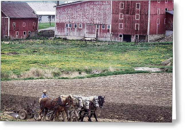 Amish Farms Greeting Cards - Amish Farm in Pennsylvania Greeting Card by Mountain Dreams