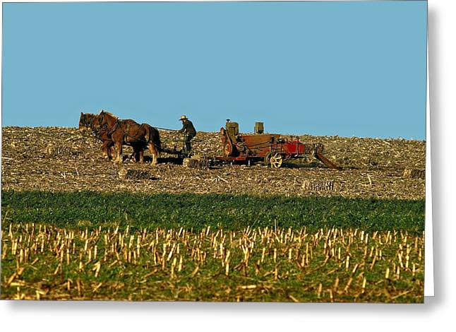 Hay Bales Greeting Cards - Amish Farmer Plowing Greeting Card by Sally Weigand