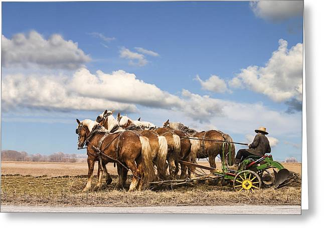 Amish Photographs Photographs Greeting Cards - Amish farmer plowing Greeting Card by Terry Shoemaker
