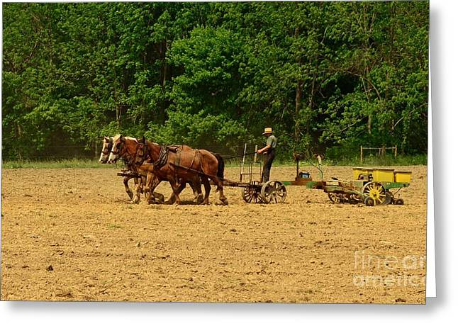 Amish Greeting Cards - Amish Farmer Tilling The Fields Greeting Card by Paul Ward