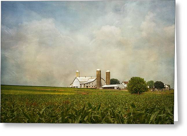 Kim Hojnacki Greeting Cards - Amish Farmland Greeting Card by Kim Hojnacki