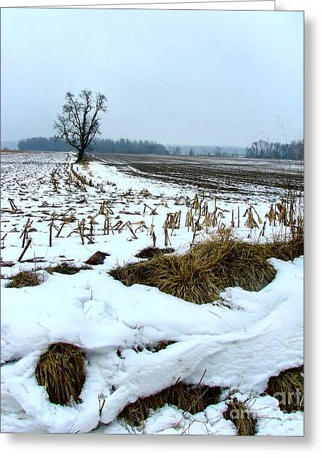 Amish Greeting Cards - Amish Field in Winter Greeting Card by Julie Dant