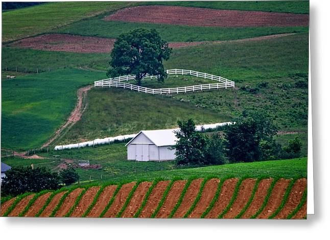 Amish Farms Greeting Cards - Amish Landscape Greeting Card by Dan Sproul