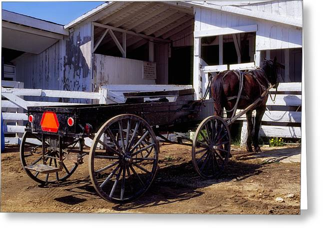 Amish Farms Greeting Cards - Amish Life in Lancaster County Pennsylvania Greeting Card by Mountain Dreams
