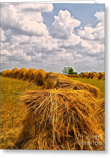 Winter Wheat Greeting Cards - Amish Sheaves Greeting Card by Brian Mollenkopf