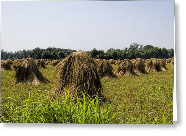 Harvestime Greeting Cards - Amish Wheat Stacks Greeting Card by Kathy Clark