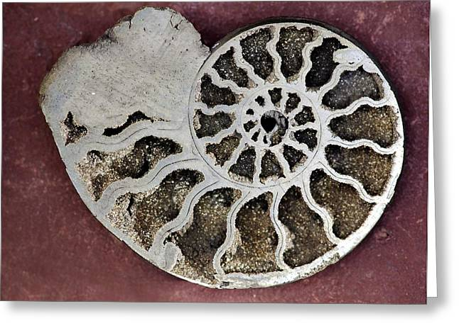 Ammonite Greeting Card by Dirk Wiersma