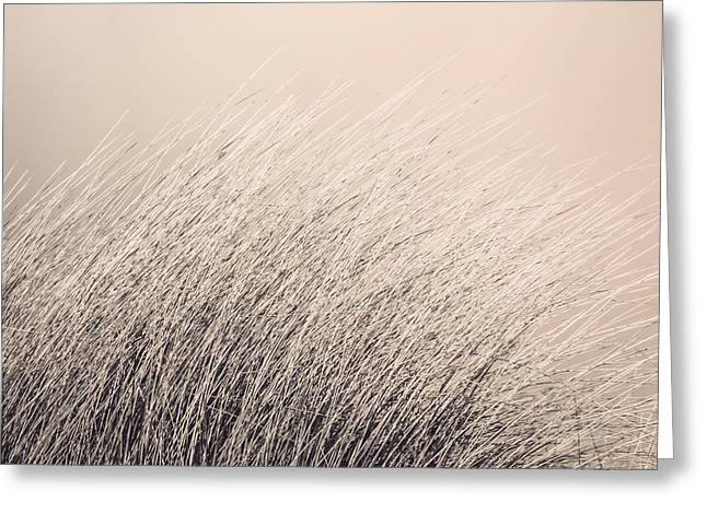 Bent Greeting Cards - Ammophila Greeting Card by Wim Lanclus