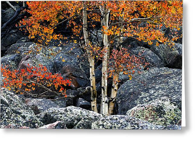 Among Boulders Greeting Card by Chad Dutson