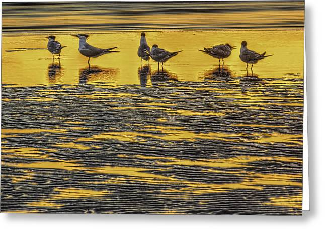 Tide Pool Greeting Cards - Among Friends Greeting Card by Marvin Spates