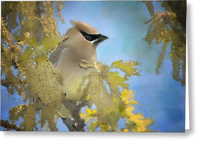 Cedar Waxwings Greeting Cards - Among the Catkins Greeting Card by Betty LaRue