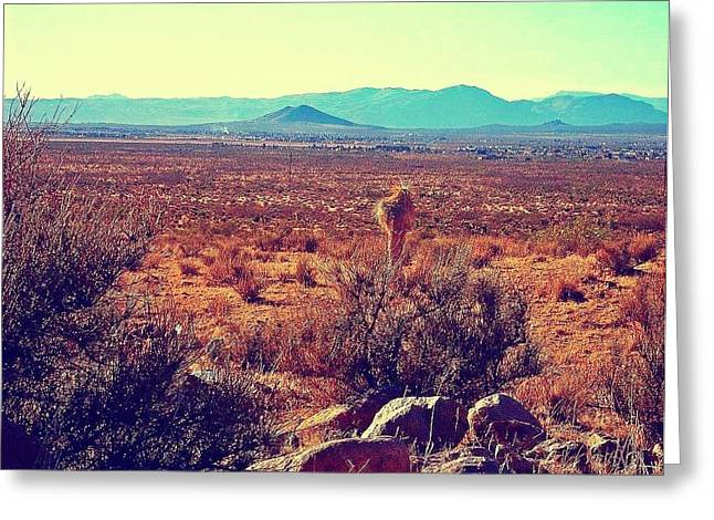 Las Cruces Landscape Greeting Cards - Among the Desert Greeting Card by Sarah Jane Thompson