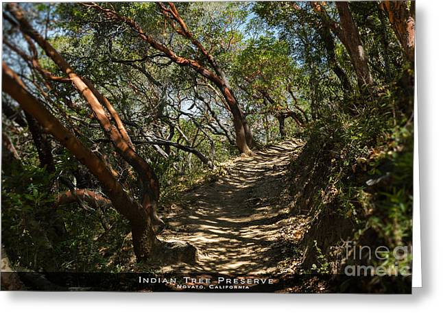 Marin County Greeting Cards - Among the Madrone Greeting Card by Along The Trail