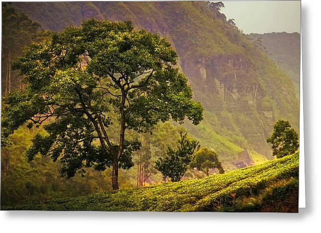 Misty Pine Photography Greeting Cards - Among the Mountains and Tea Plantations. Nuwara Eliya. Sri Lanka Greeting Card by Jenny Rainbow