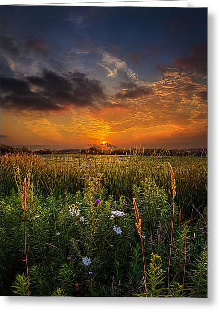 Wildflower Photograph Greeting Cards - Among the Stillness Greeting Card by Phil Koch