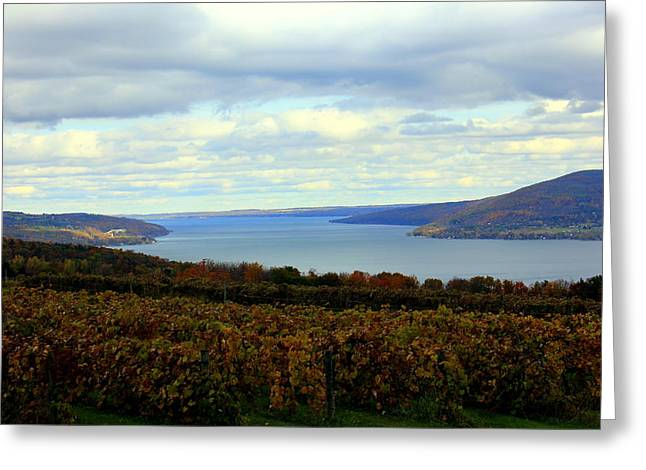 Canandaigua Lake Greeting Cards - Among  the Vines Greeting Card by Glenn Curtis