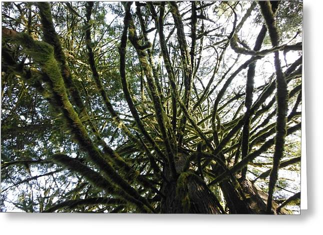 Amongst The Branches Greeting Card by Lori Thompson