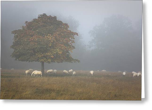 Autumn Morning Greeting Cards - Amongst the flock on an autumn morning Greeting Card by Chris Fletcher