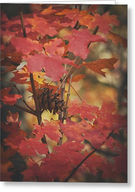Red Maple Leaves Greeting Cards - Amongst the Maple Leaves  Greeting Card by Saija  Lehtonen