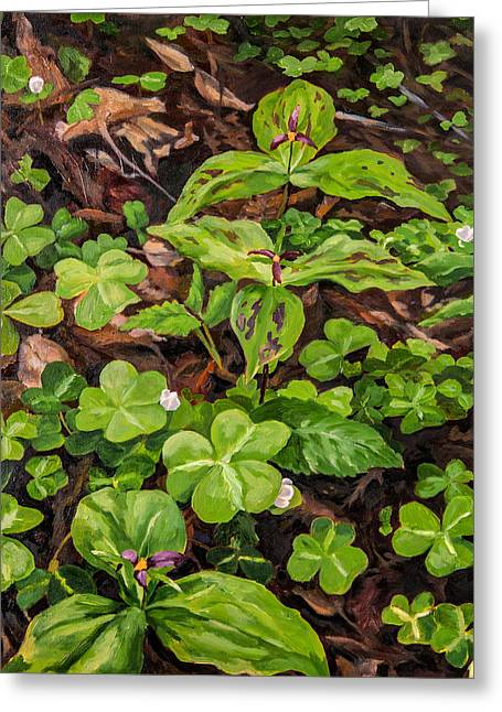 Forest Floor Paintings Greeting Cards - Amongst the Redwood Sorrel Greeting Card by Kristen O