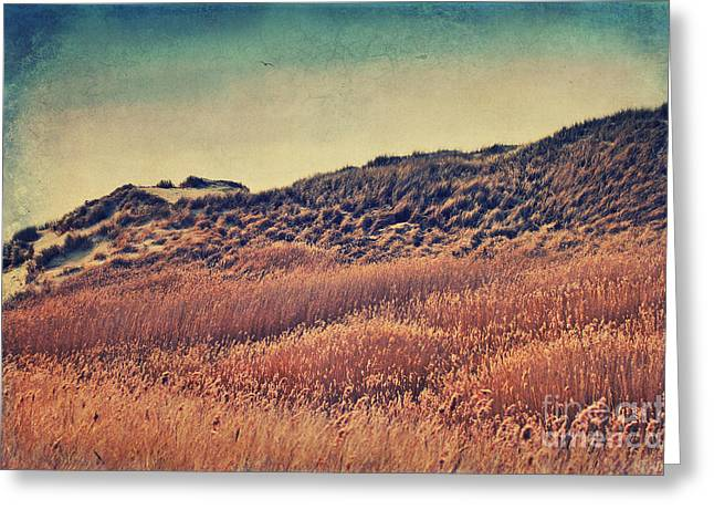 Flying Seagull Mixed Media Greeting Cards - Amrum Dunes Greeting Card by Angela Doelling AD DESIGN Photo and PhotoArt