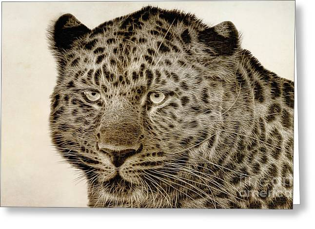 Jaguars Digital Greeting Cards - Amur Leopard Greeting Card by John Edwards