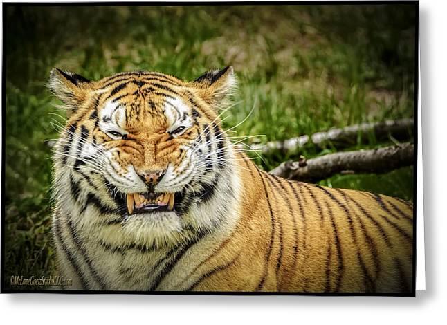 Black Cat Prairie Greeting Cards - Amur Tiger Smile Greeting Card by LeeAnn McLaneGoetz McLaneGoetzStudioLLCcom