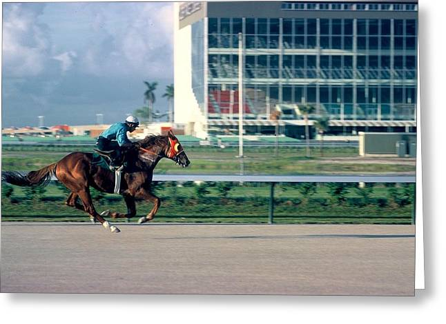 Before The Races Greeting Cards - An all out work out Greeting Card by Roy Emmett