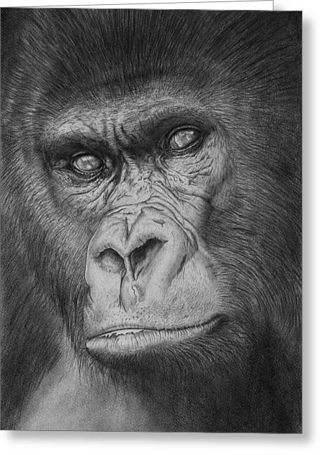 Gorilla Drawings Greeting Cards - An Ancient Race Greeting Card by Ian Cuming