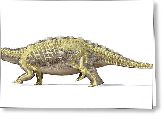 Full Body Digital Art Greeting Cards - An Ankylosaurus Dinosaur With Full Greeting Card by Leonello Calvetti