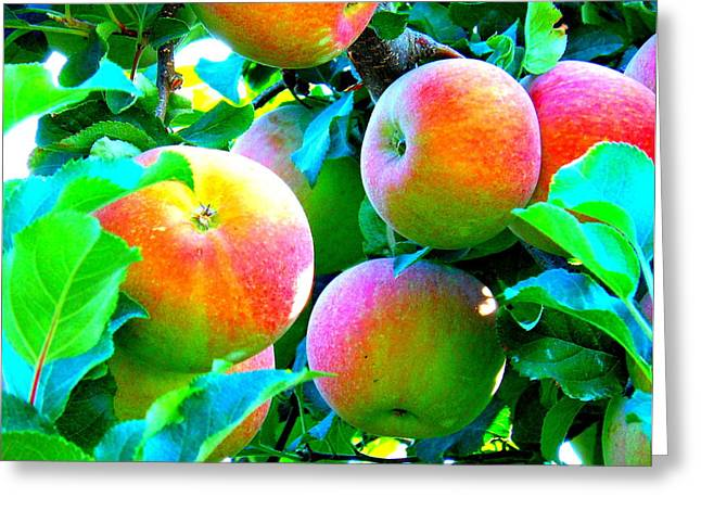 Wapato Photographs Greeting Cards - An Apple a Day Greeting Card by Kay Gilley