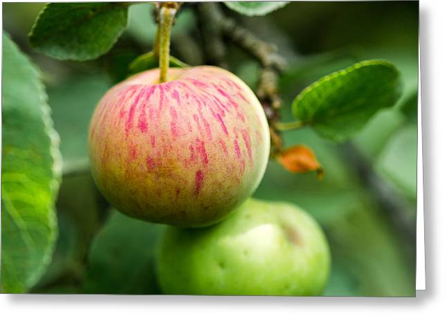 An Apple - Featured 3 Greeting Card by Alexander Senin