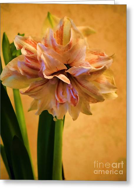 S Amaryllis Greeting Cards - An Artists Muse Greeting Card by Brenda Kean
