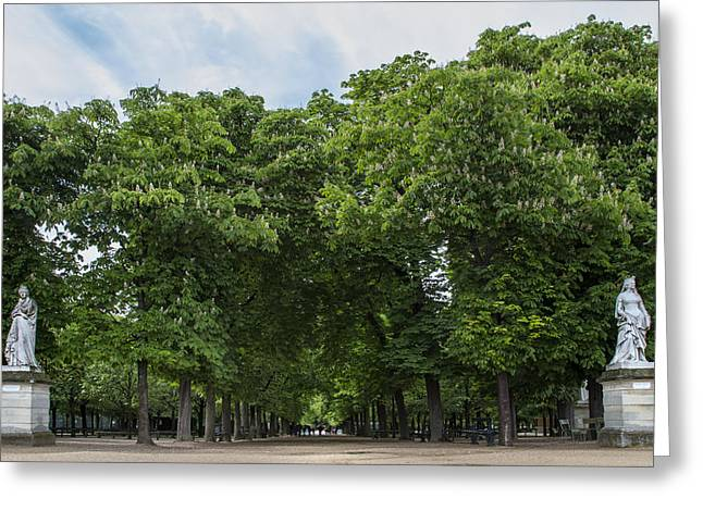 Paris Trees Nature Scenes Greeting Cards - An Avenue of Green Trees in Paris Greeting Card by Nomad Art And  Design
