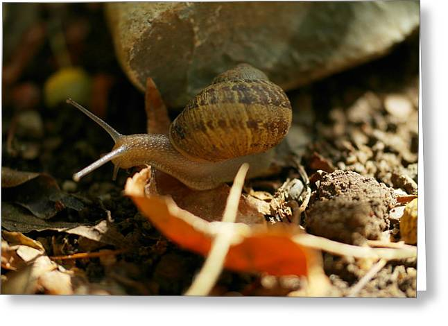 Little Critters Greeting Cards - An awesomely slow snail Greeting Card by Jeff  Swan