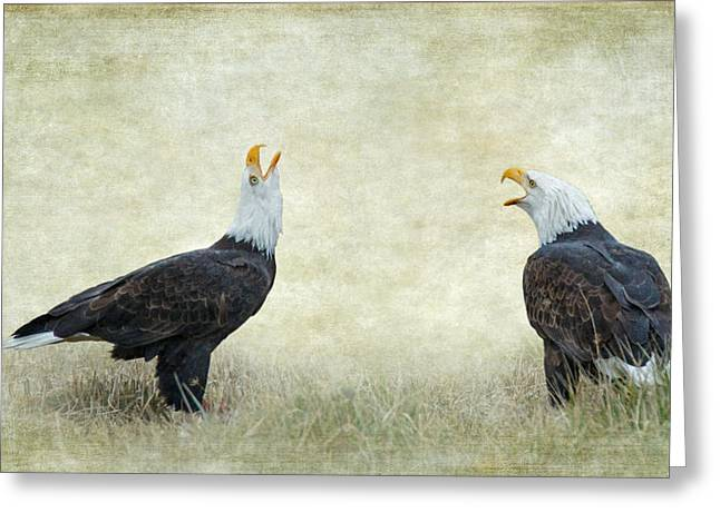 Wildlife Refuge. Greeting Cards - An Eagle Duet Greeting Card by Angie Vogel